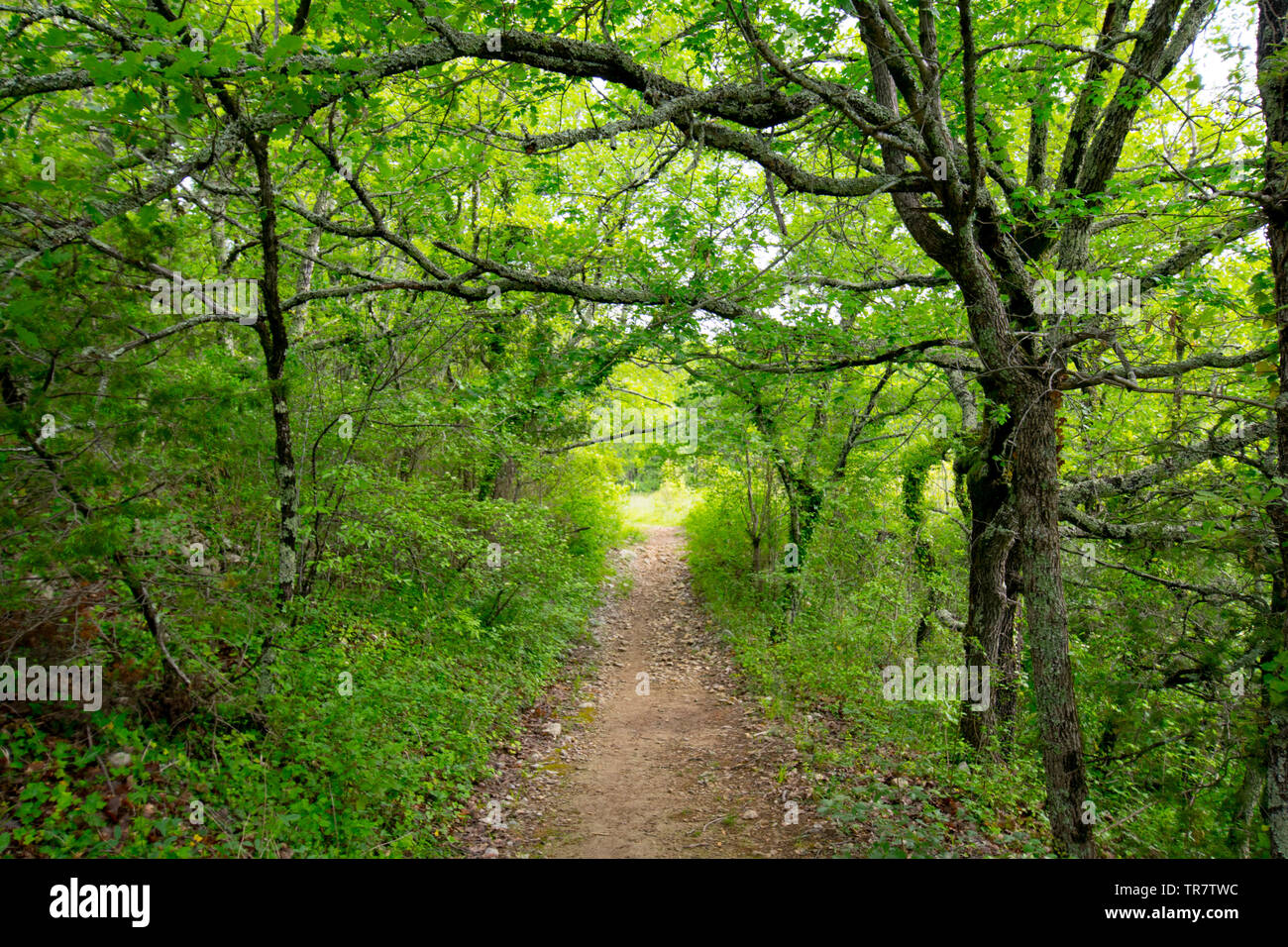 mystical forest path near Larnas in the Ardeche region in france - Stock Image