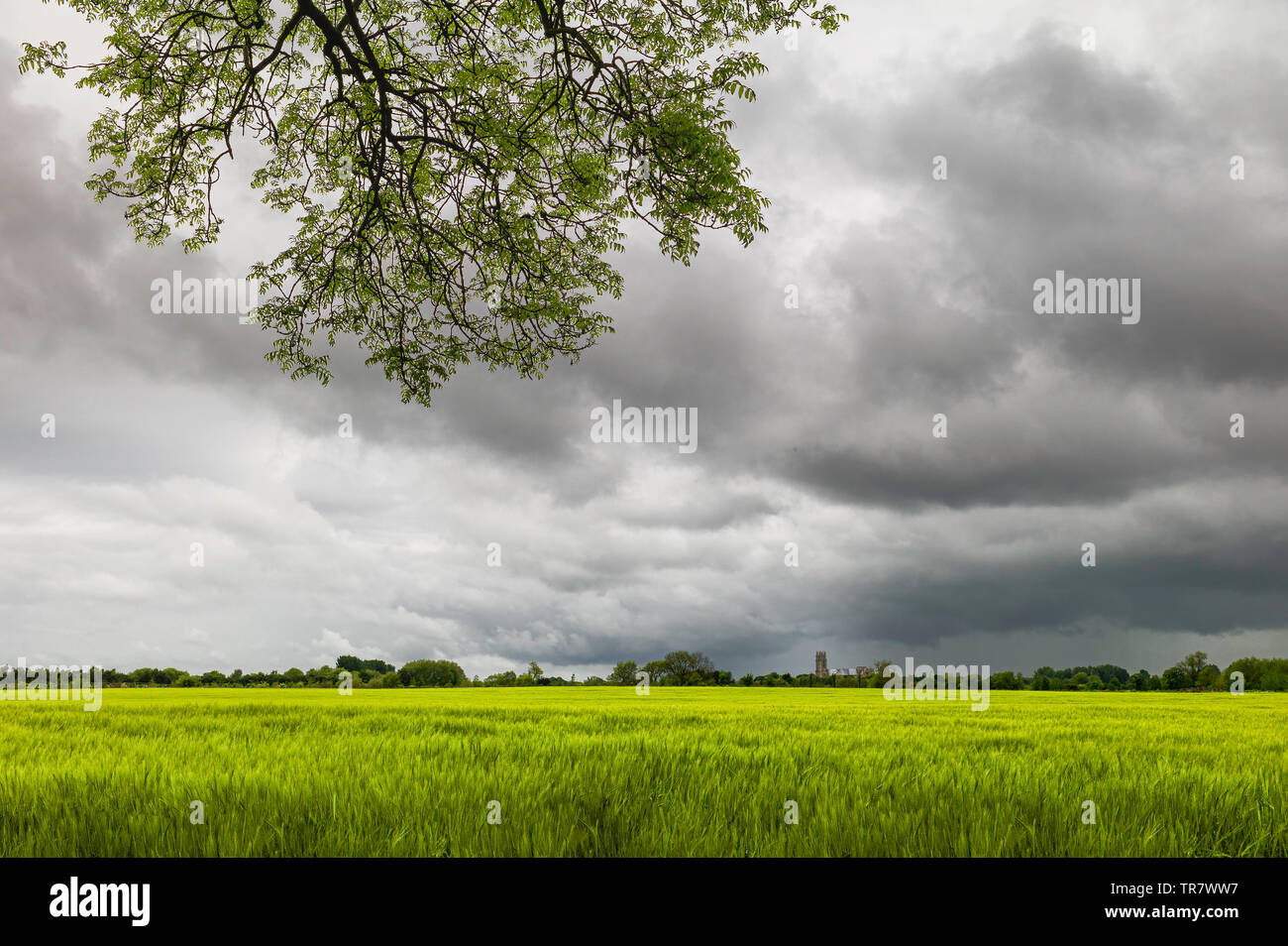 Beautiful English countryside with wheat field and ancient minster on horizon on bright morning under cloudy sky in Beverley, - Stock Image