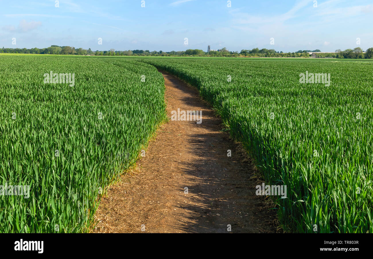Footpath through beautiful English countryside flanked by wheat field in Beverley, Yorkshire, UK. - Stock Image