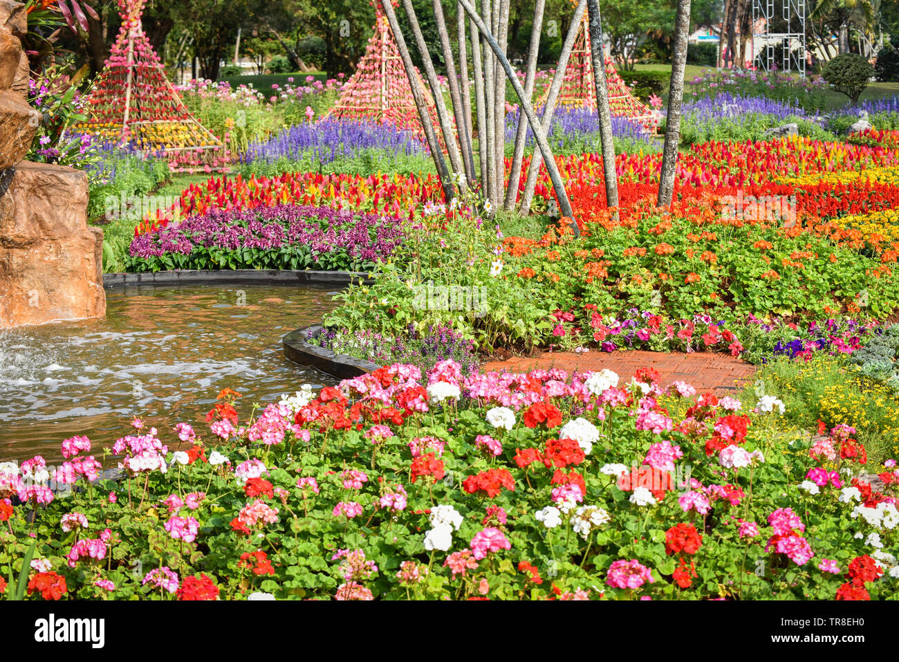 Colorful Garden Spring Flower Multi Color With Various Kinds