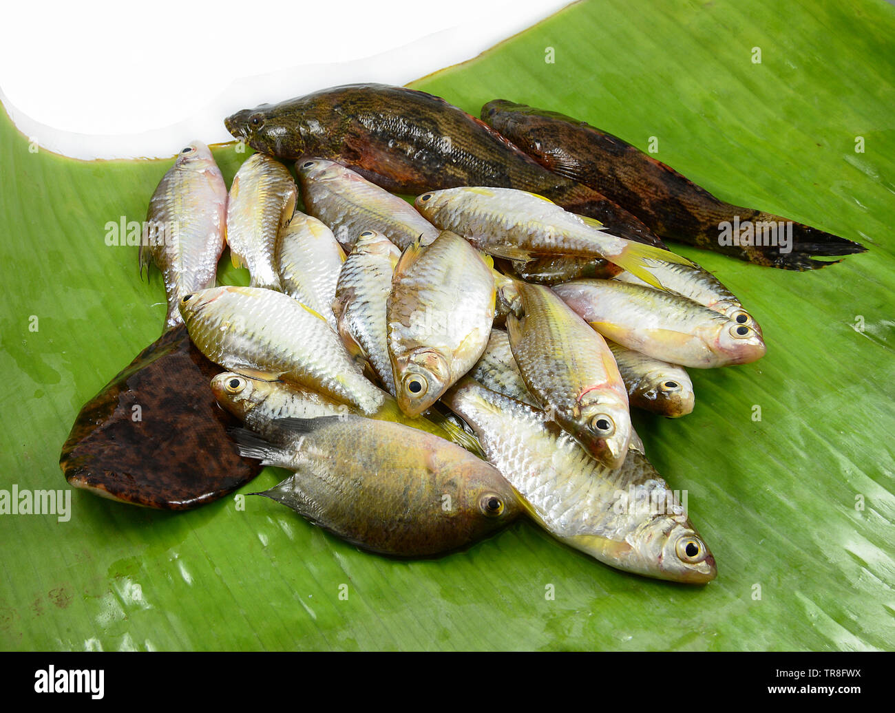 fresh small fish various types with fish goby siamese mud carp on banana leaf Stock Photo