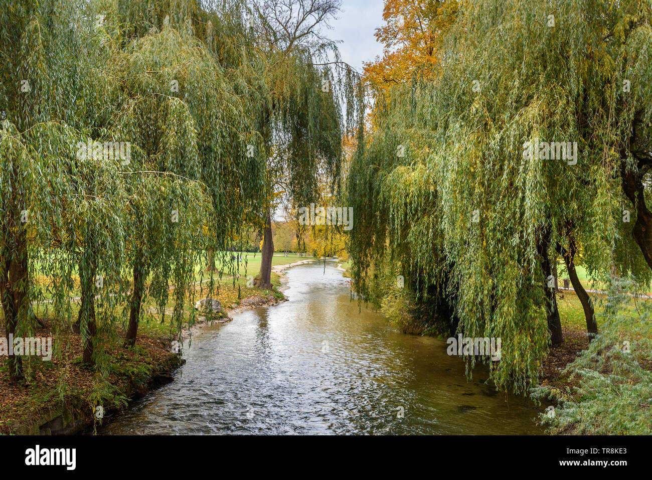Englischer Garten in autumn. Munich Germany - Stock Image