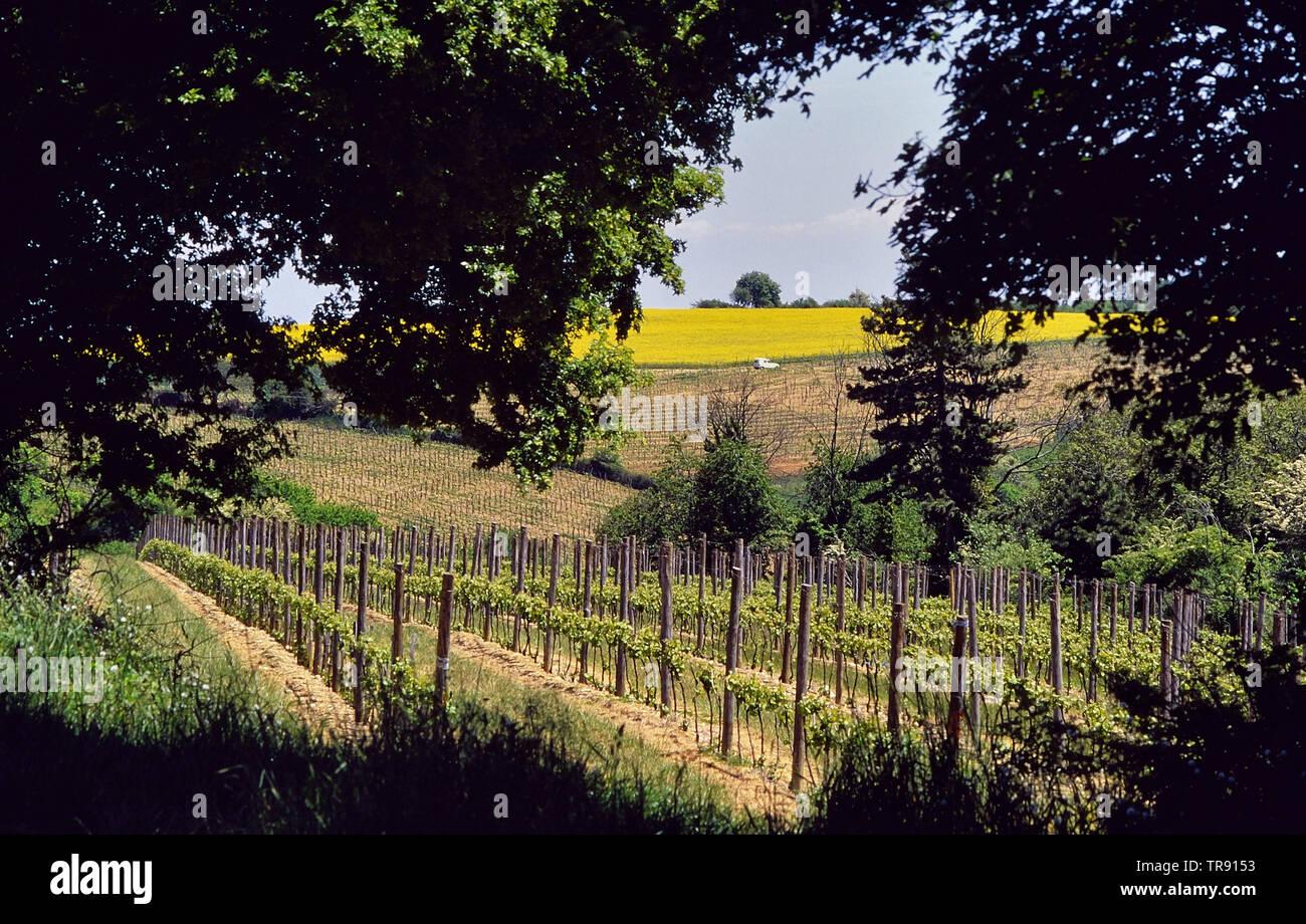 The vineyards of Burgundy, France - Stock Image