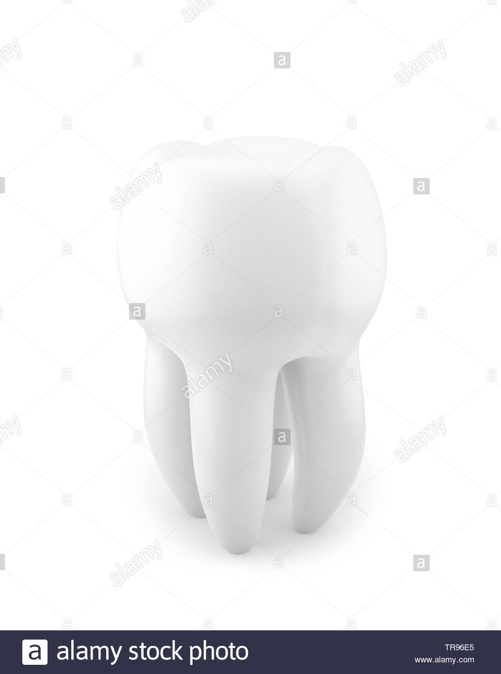 Human Tooth , isolated on white , 3d render - Stock Image