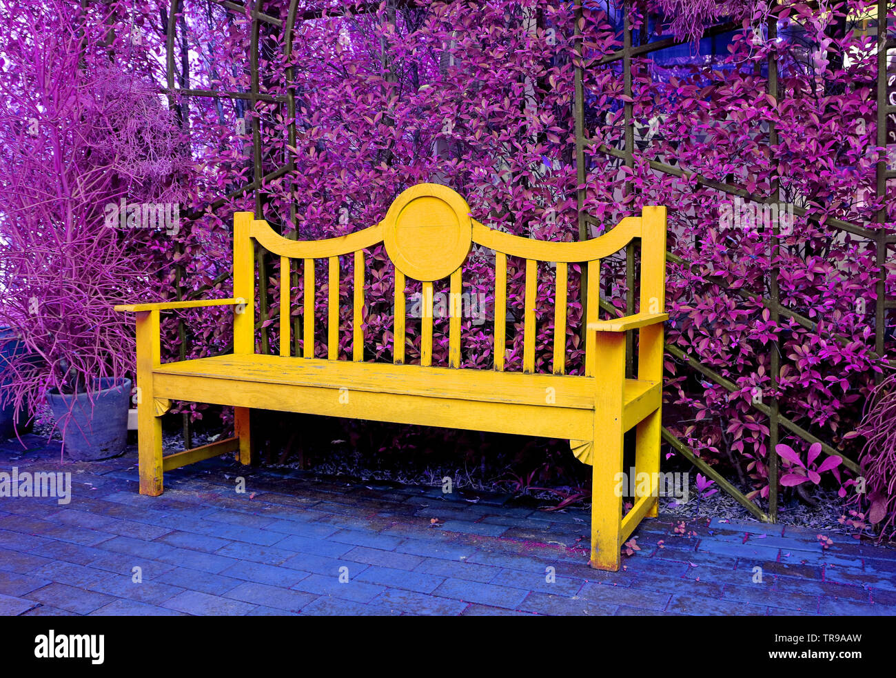 Stupendous Surreal Pop Art Style Yellow Wooden Bench In Purple Colored Ncnpc Chair Design For Home Ncnpcorg