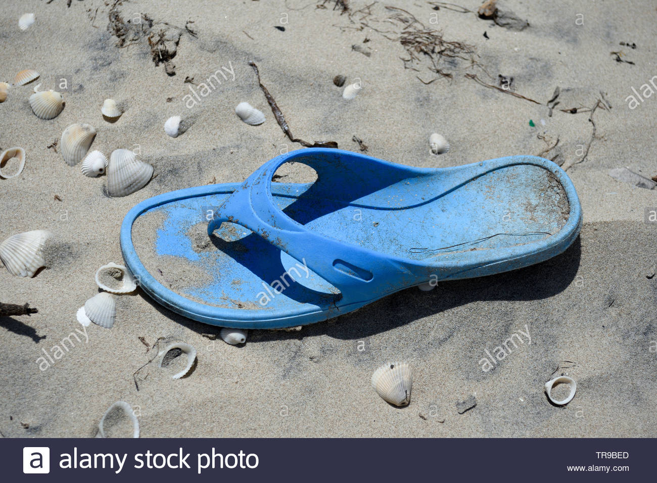 Abandoned Flip Flop on Beach. Abandoned Sandal on Beach with Seashells. Abandoned Thong on Beach. Seashells Abandoned Thong Flip Flop. Seashells, sand - Stock Image