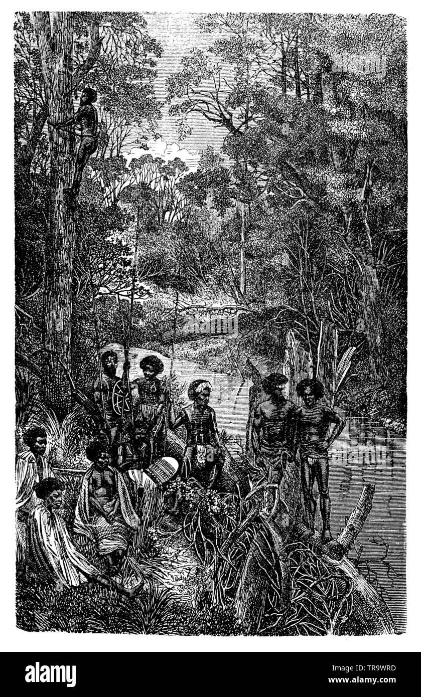 Australian natives climb a eucalyptus tree, ,  (encyclopedia, 1893) - Stock Image