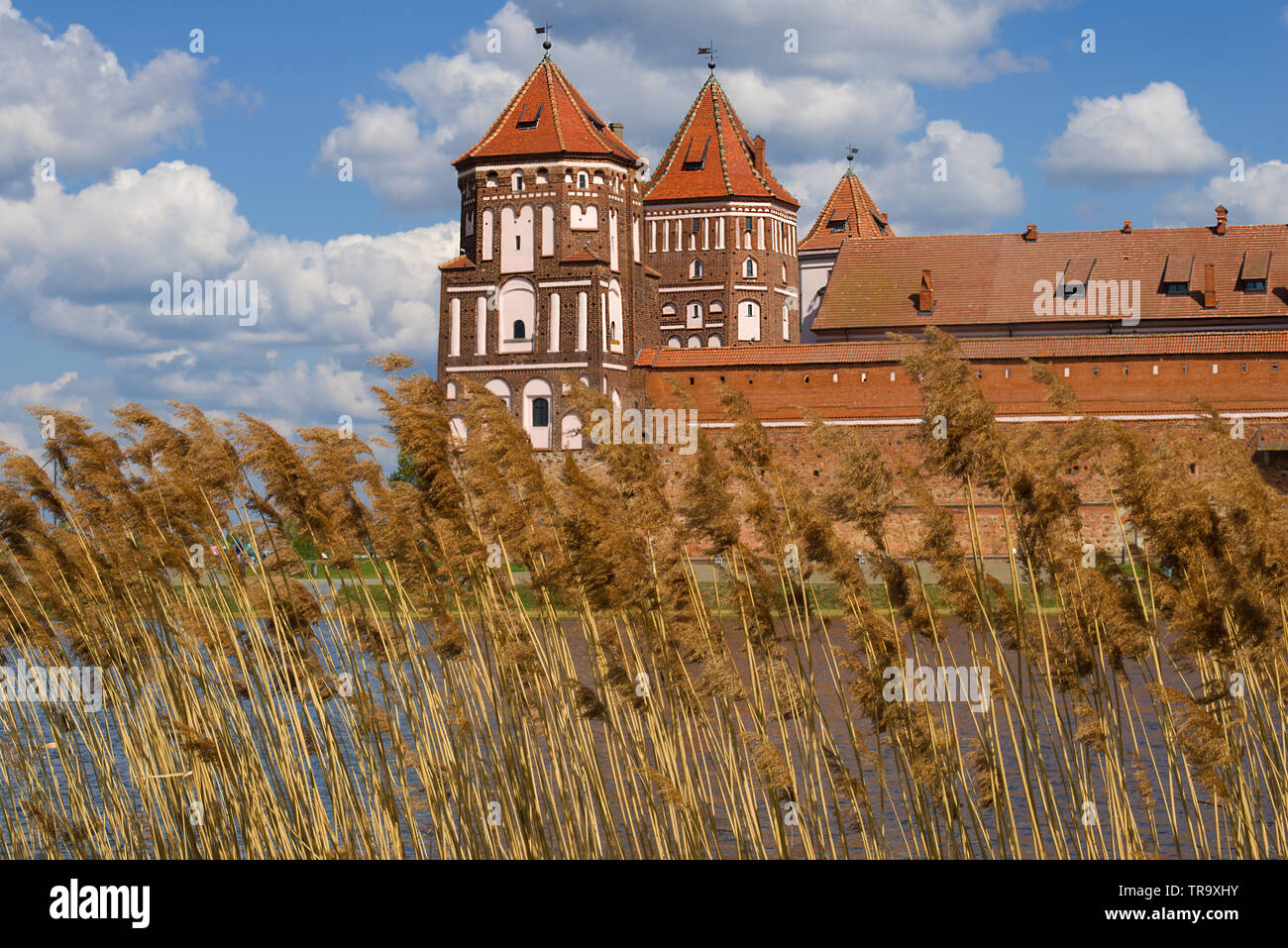 Reed on the background of Mir Castle cloudy April day. Mir, Belarus - Stock Image