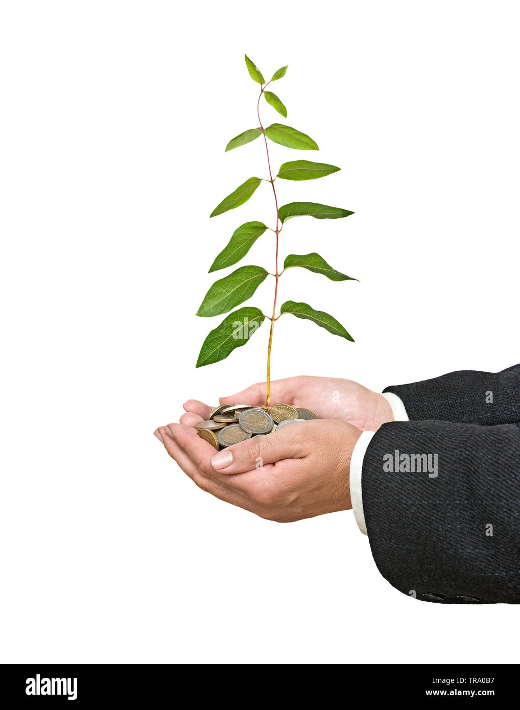 Palms with a plant growng from pile of coins - Stock Image