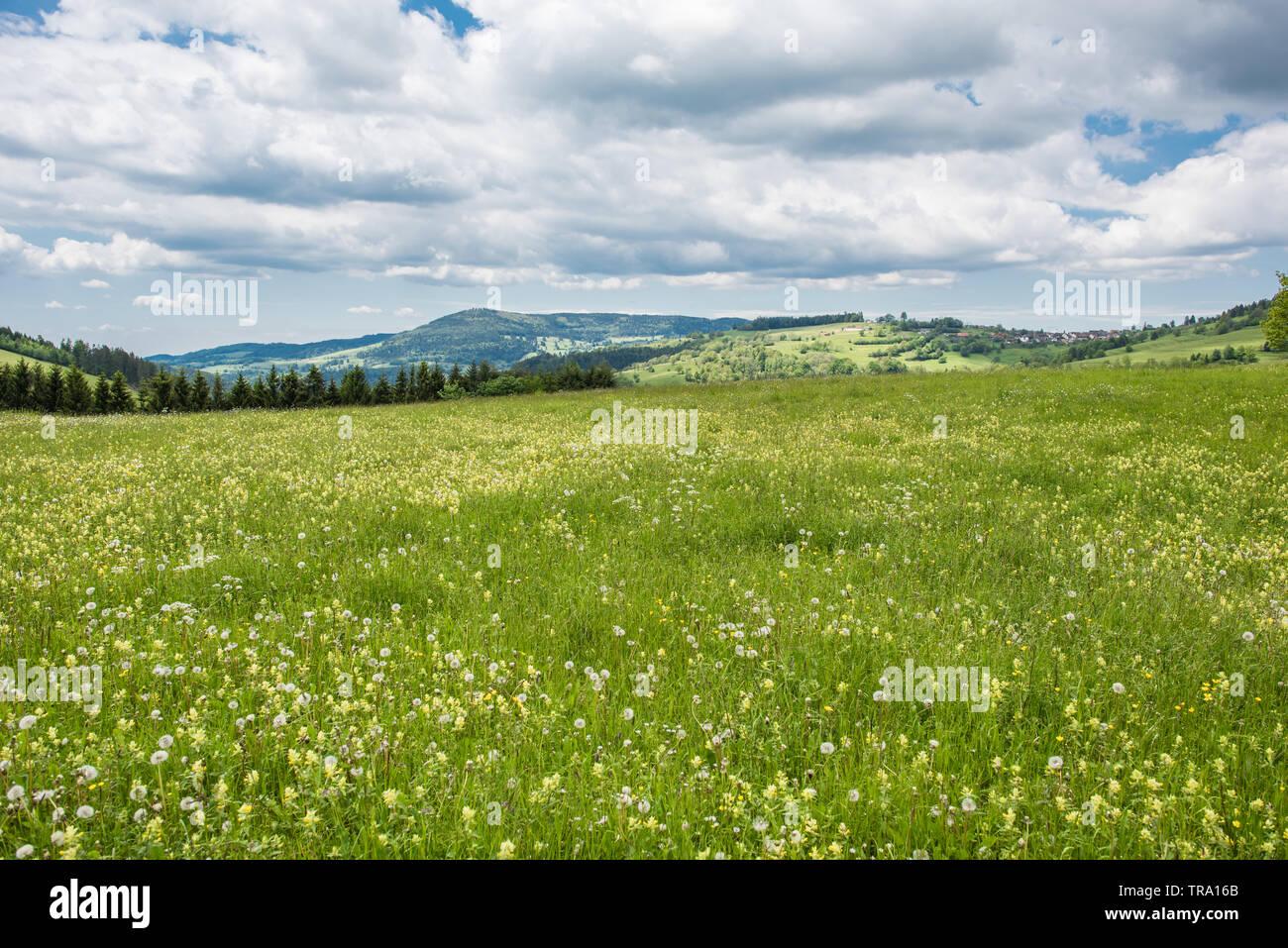 nature landscape black forest germany - Stock Image