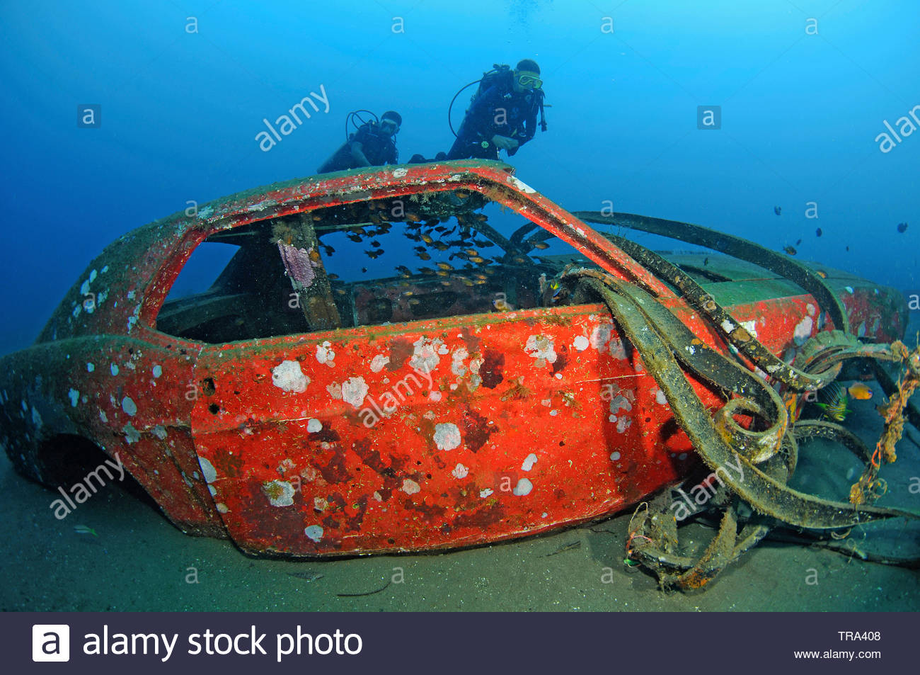 Scuba diver at a sunken Ford Mustang car, Dauin, Negros island, Philippines - Stock Image