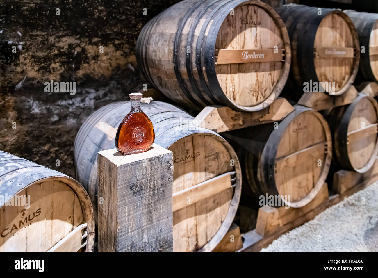 Oak Barrels of Camus Cognac in France - Stock Image