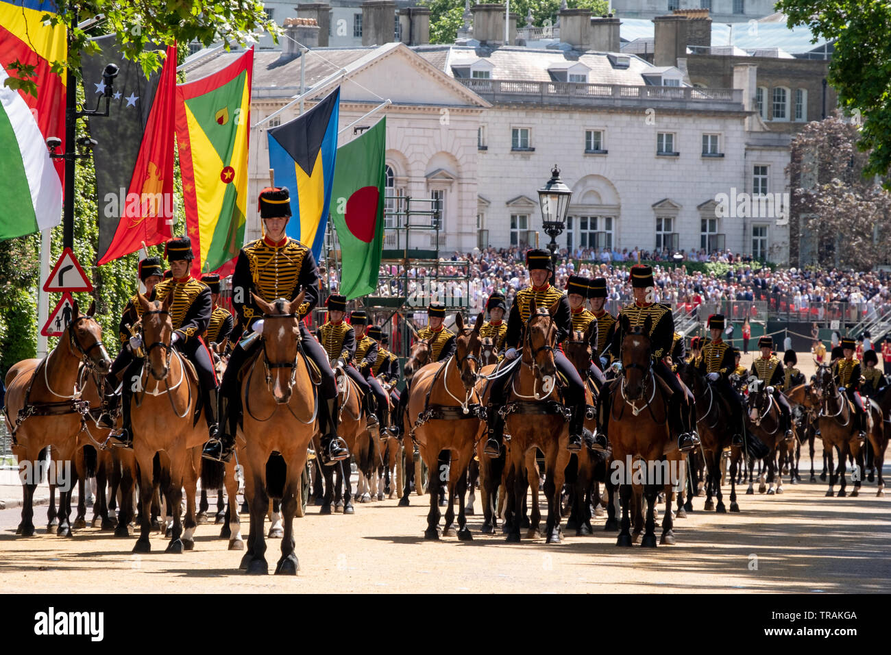 Horses at the Trooping the Colour military parade, London, for Queen Elizabeth's birthday. Horses are part of the British Royal Household Cavalry, - Stock Image