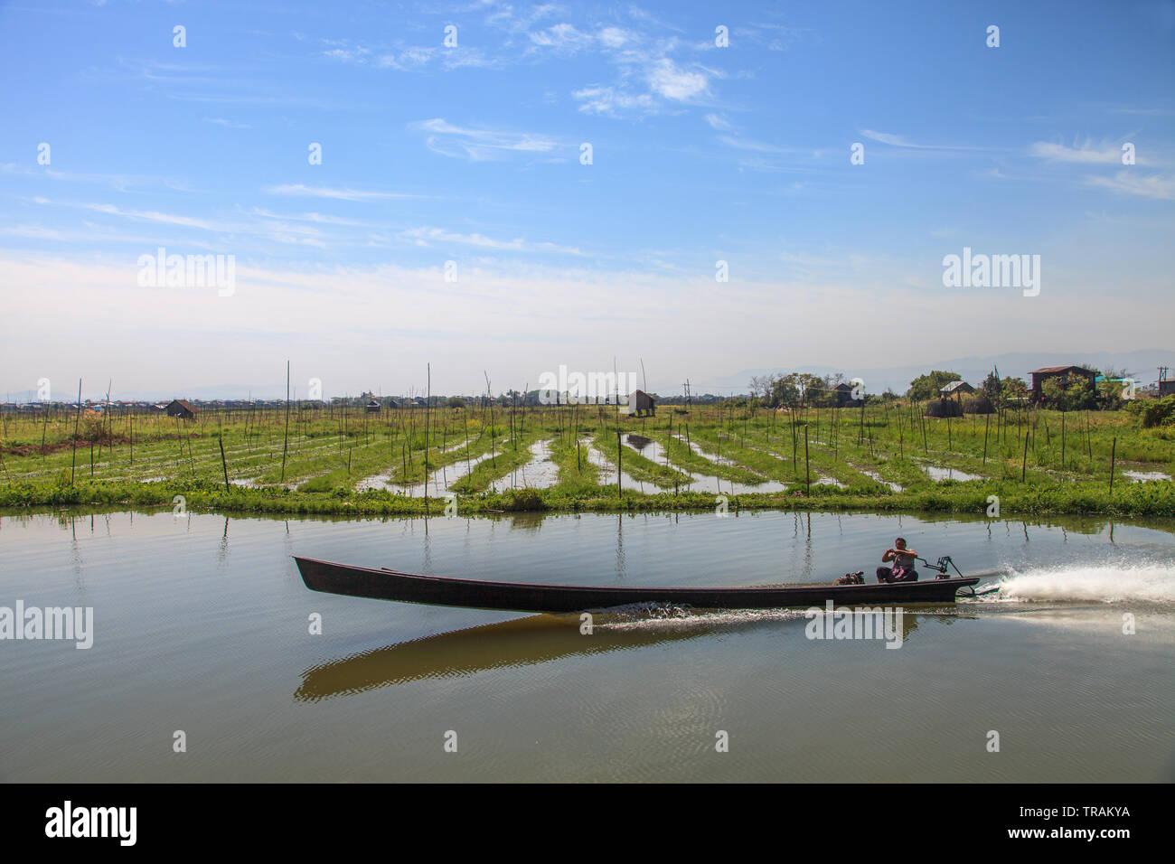 Floating vegetable gardens at Inle Lake, Myanmar - Stock Image