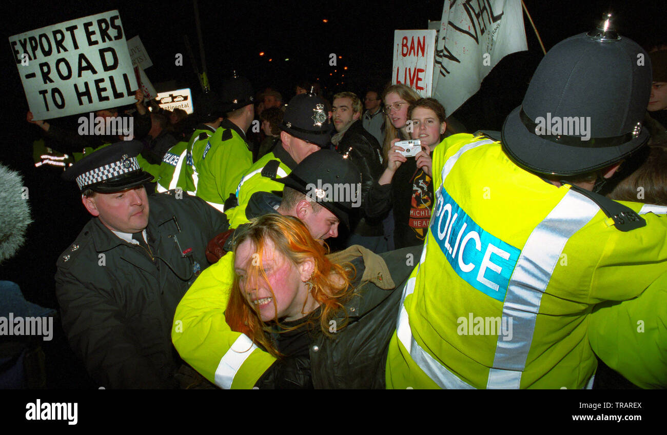 1995 - Live exports of veal protests at Millbay Docks in Plymouth, Devon, England. - Stock Image