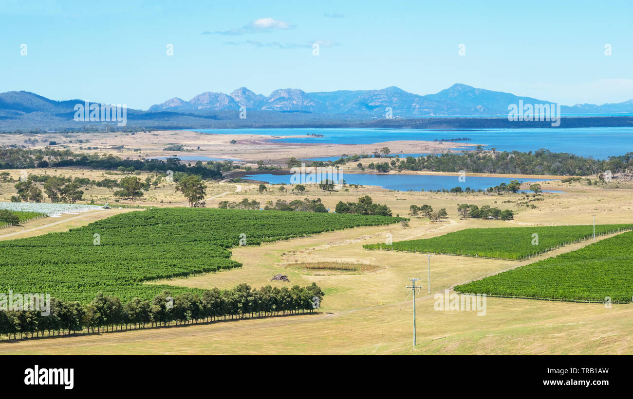 Moulting Lagoon Game Reserve on the East Coast of Tasmania, seen here with vineyards in the foreground and Freycinet National Park in the background, Stock Photo