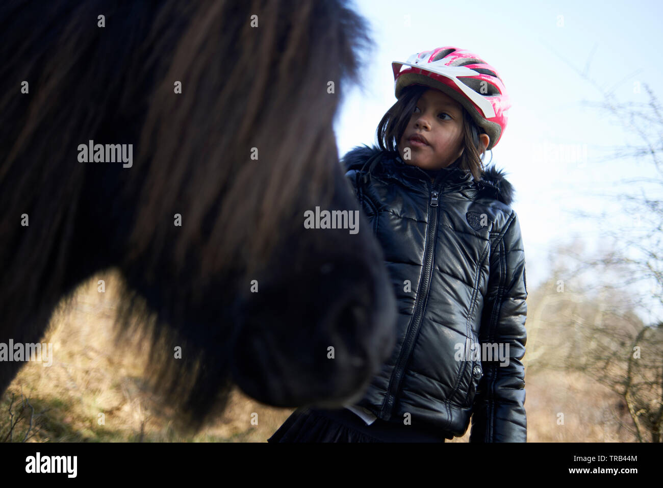Young Asian girl touching and stroking wild horses outside in nature in summer sunshine Stock Photo