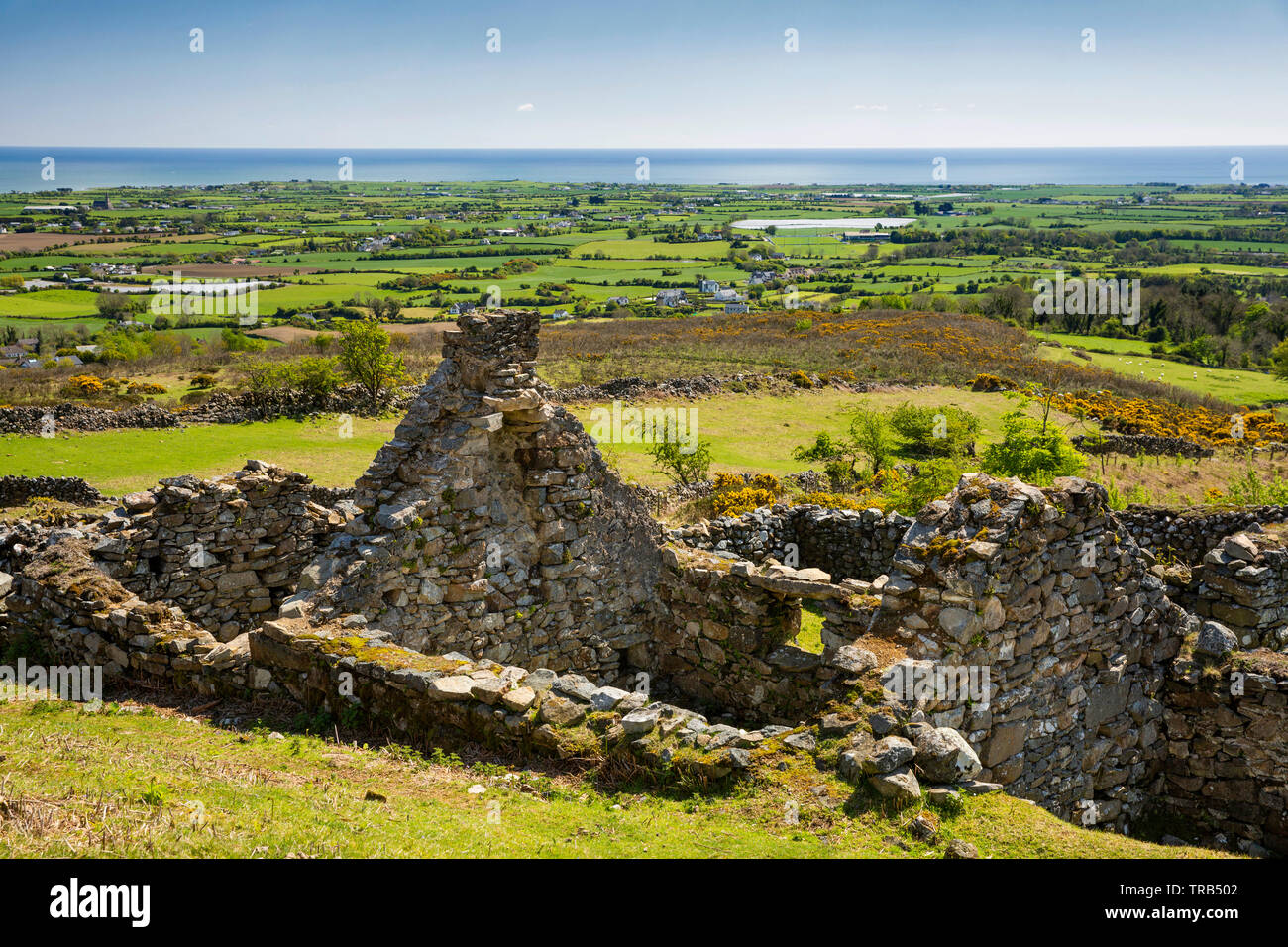 Ireland, Co Louth, Cooley Peninsula, Rooskey, ruins of house in abandoned pre-famine village overlooking Carlingford Lough - Stock Image