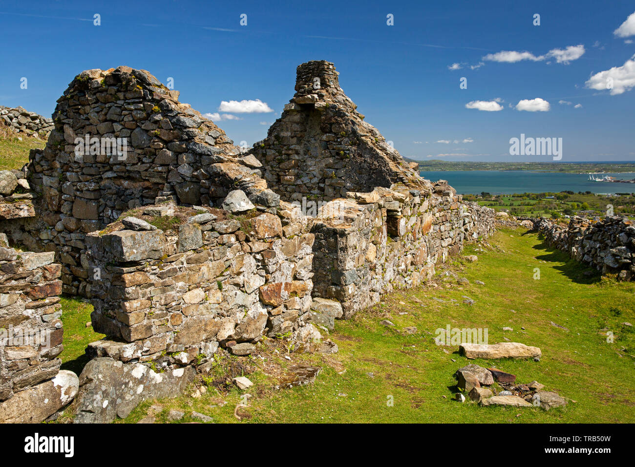 Ireland, Co Louth, Cooley Peninsula, Rooskey, ruins of house in abandoned pre-famine village - Stock Image