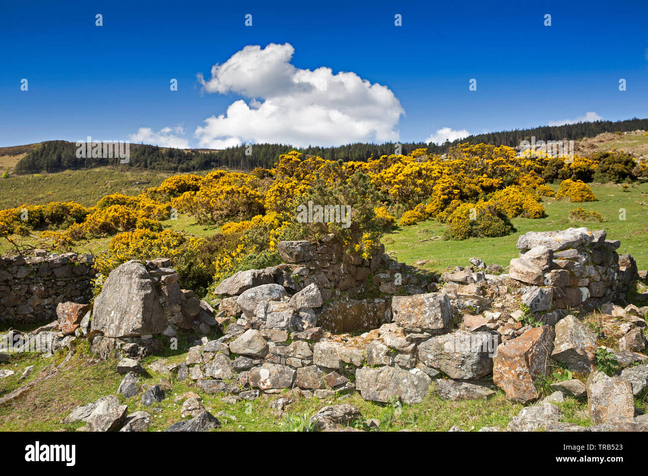 Ireland, Co Louth, Cooley Peninsula, Rooskey, ruins of house wall in abandoned pre-famine village - Stock Image