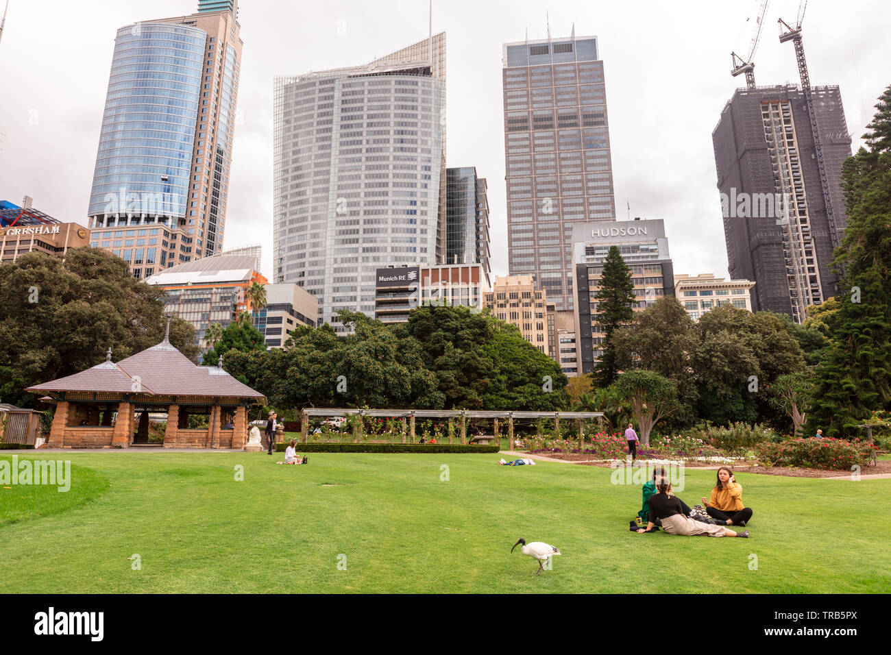 Royal Botanic Gardens city centre scene with people having picnics and enjoying company of White Ibis birds. - Stock Image