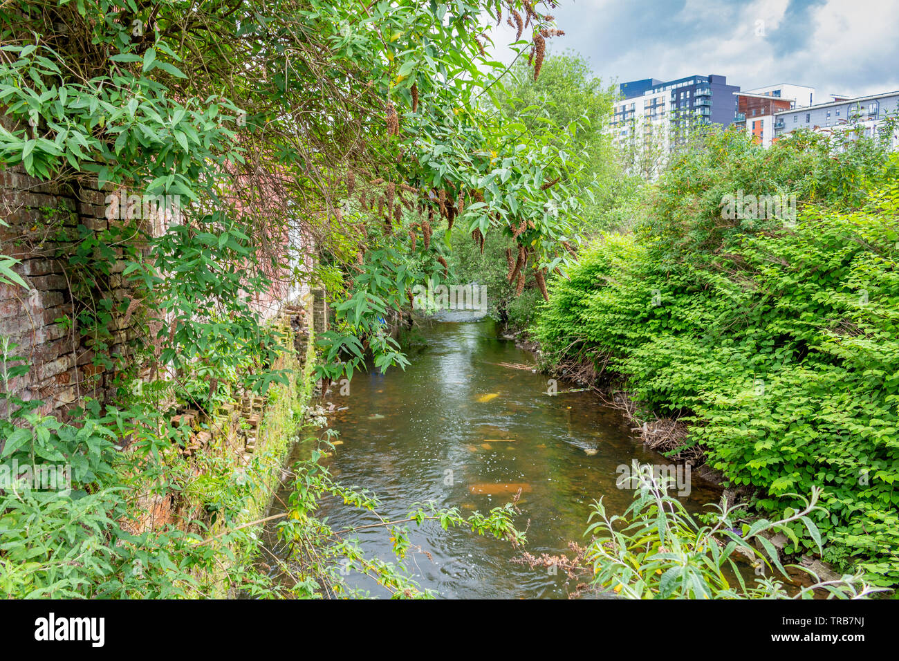 Manchester, UK: the River Irk from the Roger Street bridge. The Irk rises in Royton and runs through Chadderton, Middleton and Blackley to join the Ri - Stock Image