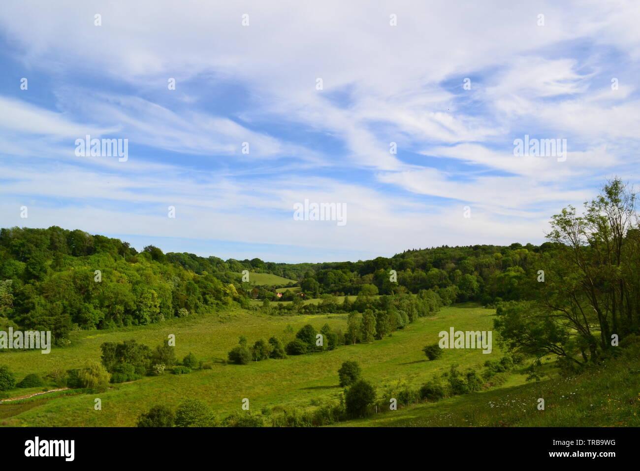 A view towards Magpie Bottom over rewilded former Austin Lodge golf course. Picture taken from Austin Spring. Near Shoreham, Kent, England, in June - Stock Image