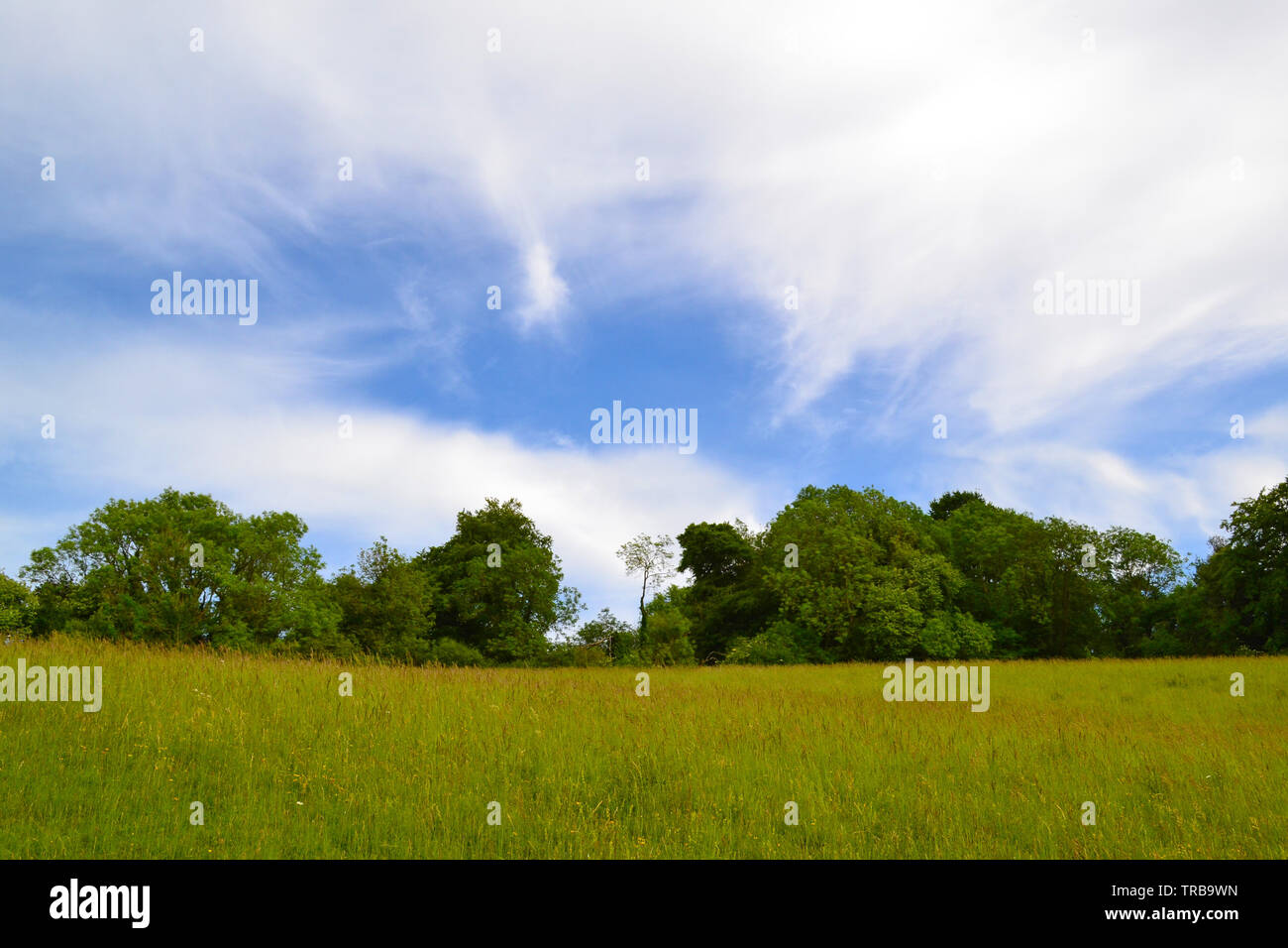 Cirrus cloud high above Romney Street near Darent Valley, Kent, England, UK in early June. Wildflower meadows and ancient woods abound in the Downs - Stock Image