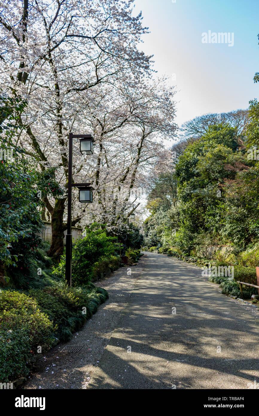 Small walking path with lanterns, in Spring, in central Kanazawa city, Ishikawa Prefecture, Japan. - Stock Image