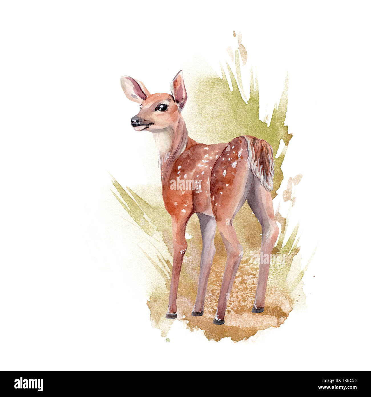 watercolor forest animal watercolor deer stock photo alamy https www alamy com watercolor forest animal watercolor deer image255333266 html