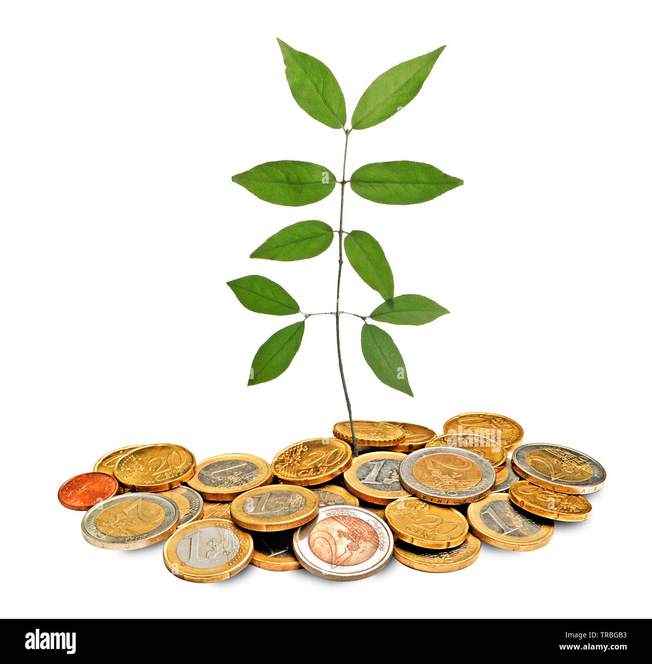 sapling growing from pile of coins - Stock Image