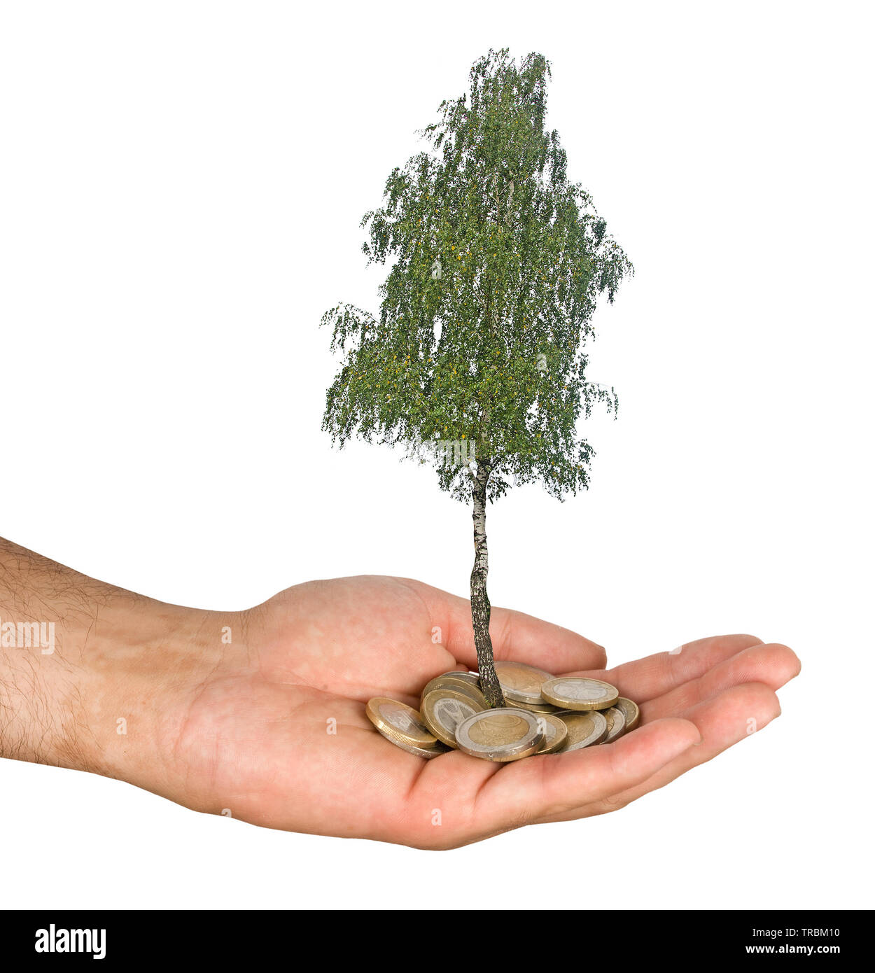 Palm with a tree growing from pile of coins - Stock Image