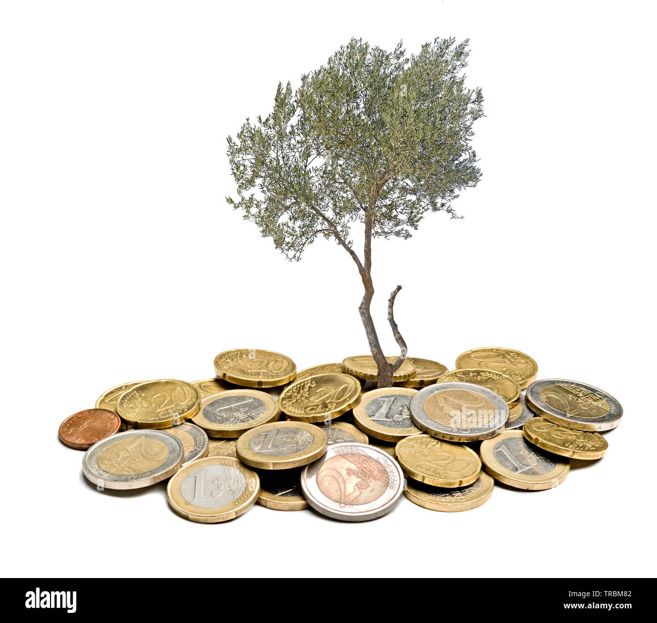 Olive tree growing from pile of coins - Stock Image