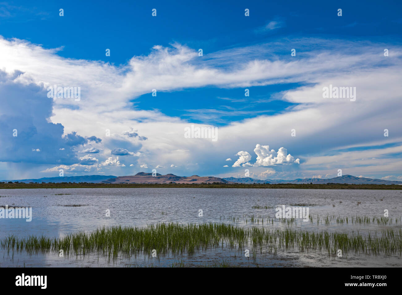 This is a view of the waters of Bear River Migratory Bird Refuge west of Brigham City, Utah. This view looks north as you enter from the east. - Stock Image