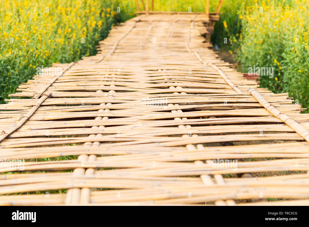 Bamboo weave walk way bridge with Yellow flowers field in sunny day - Stock Image