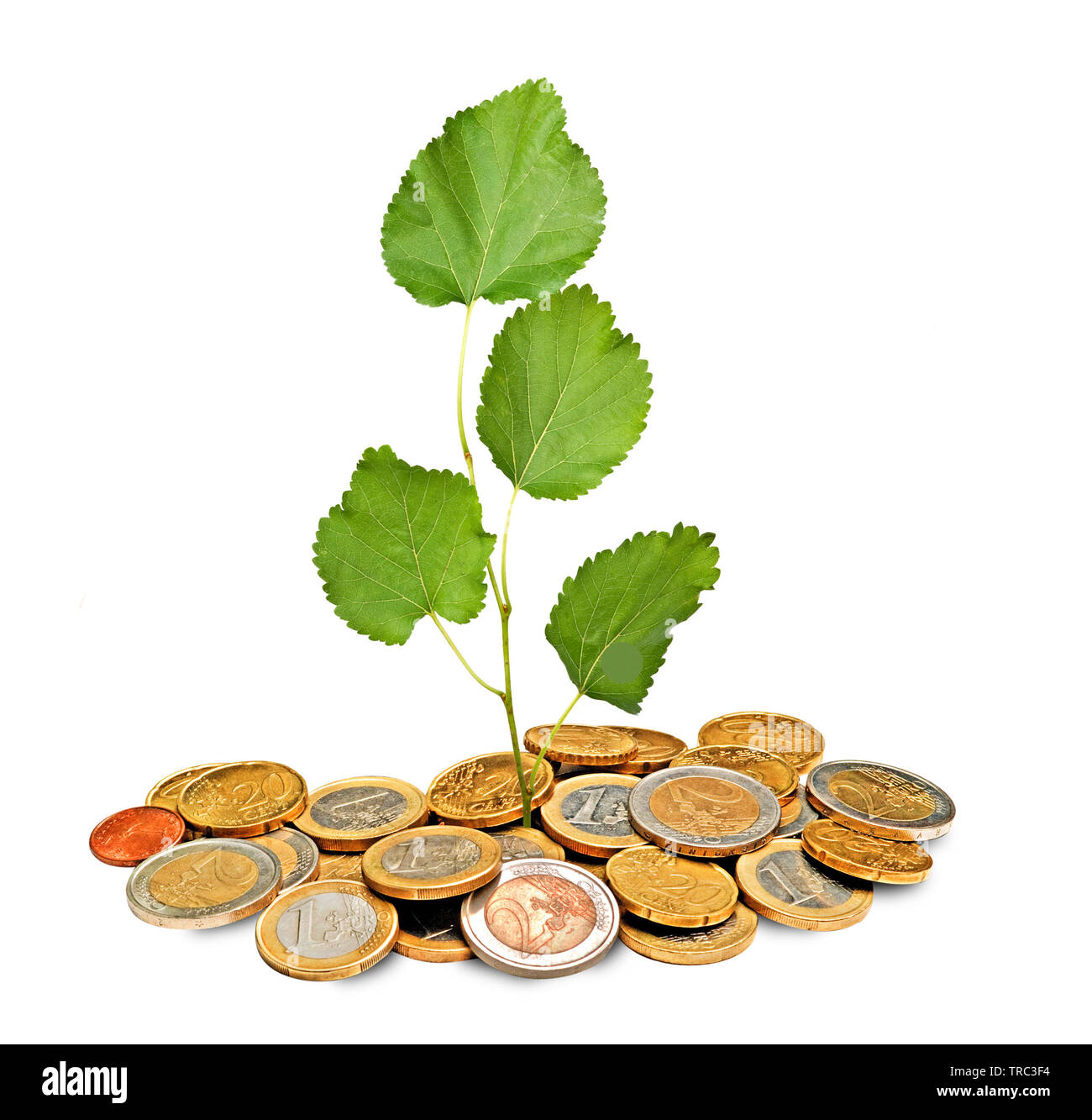 Tree growing from pile of coins - Stock Image