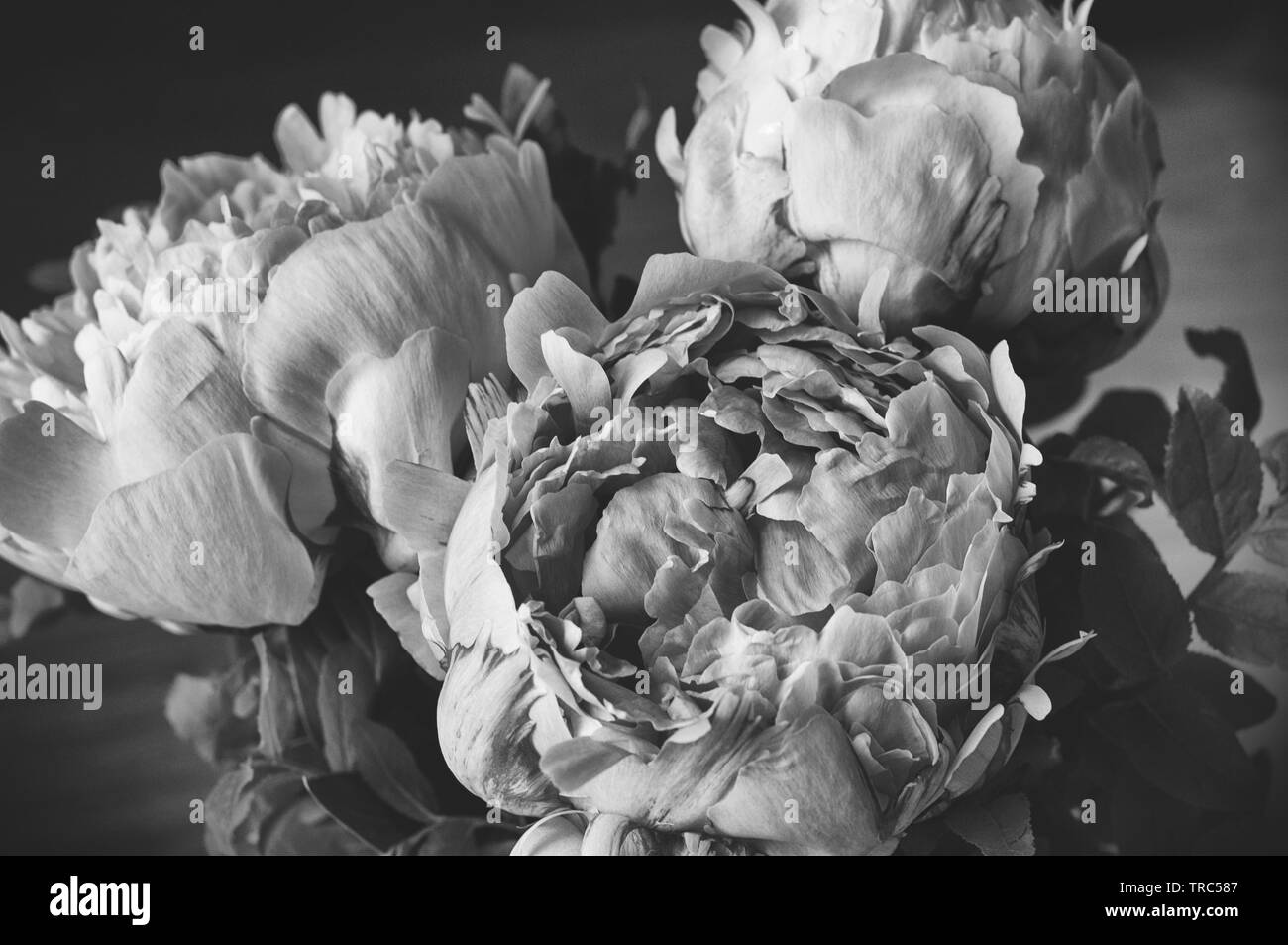 Floral Wallpaper Black And White Stock Photos Images Alamy