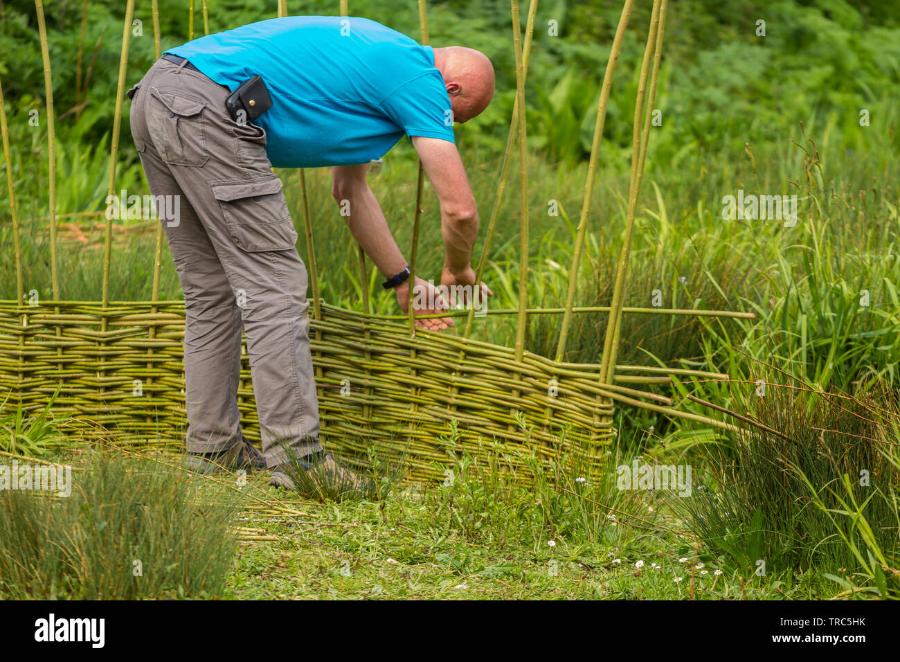 Creating a new fence at Slimbridge - Stock Image