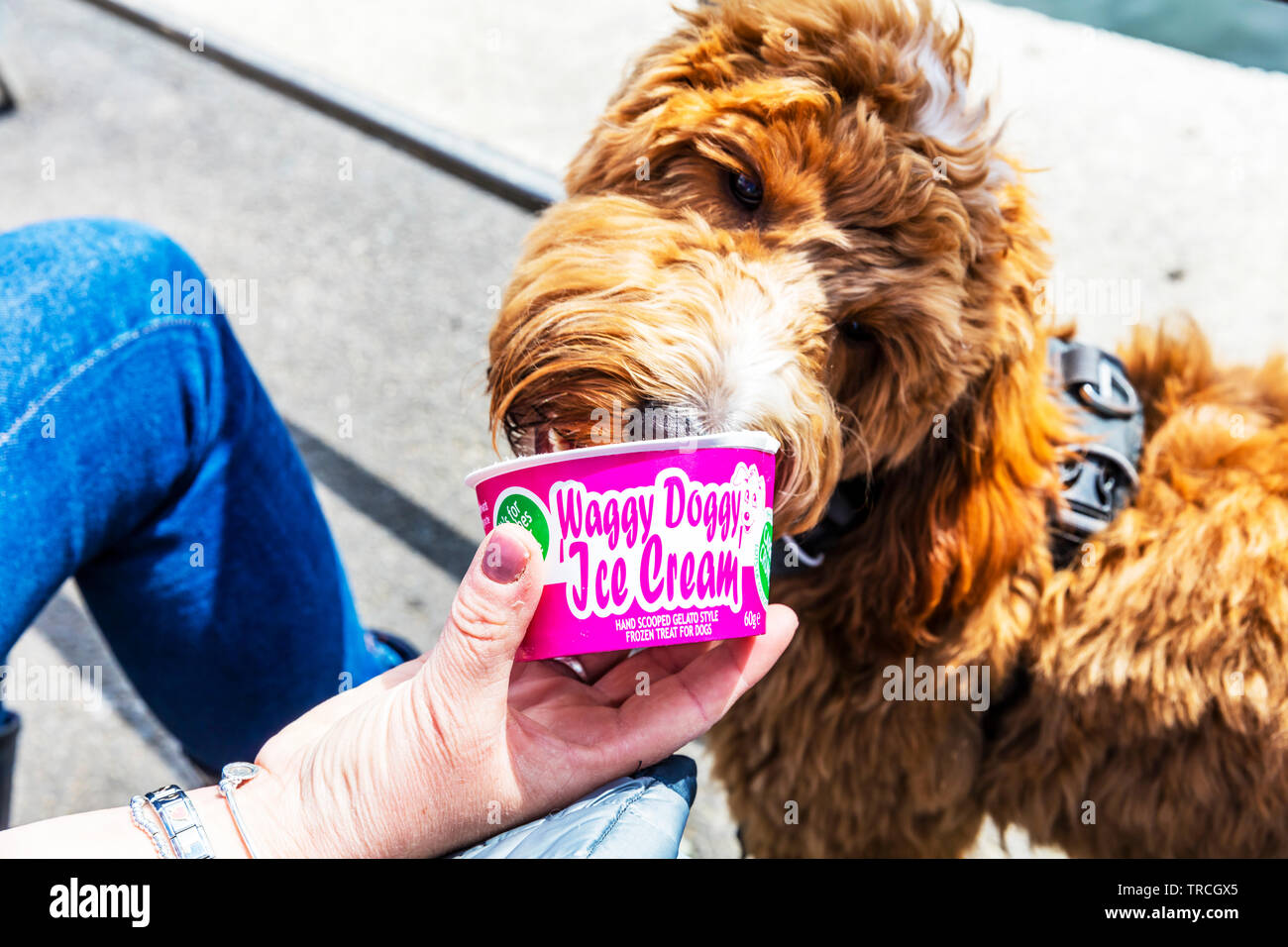 ea47170e8e Dog eating ice cream, doggy ice cream, dog ice cream, ice cream for