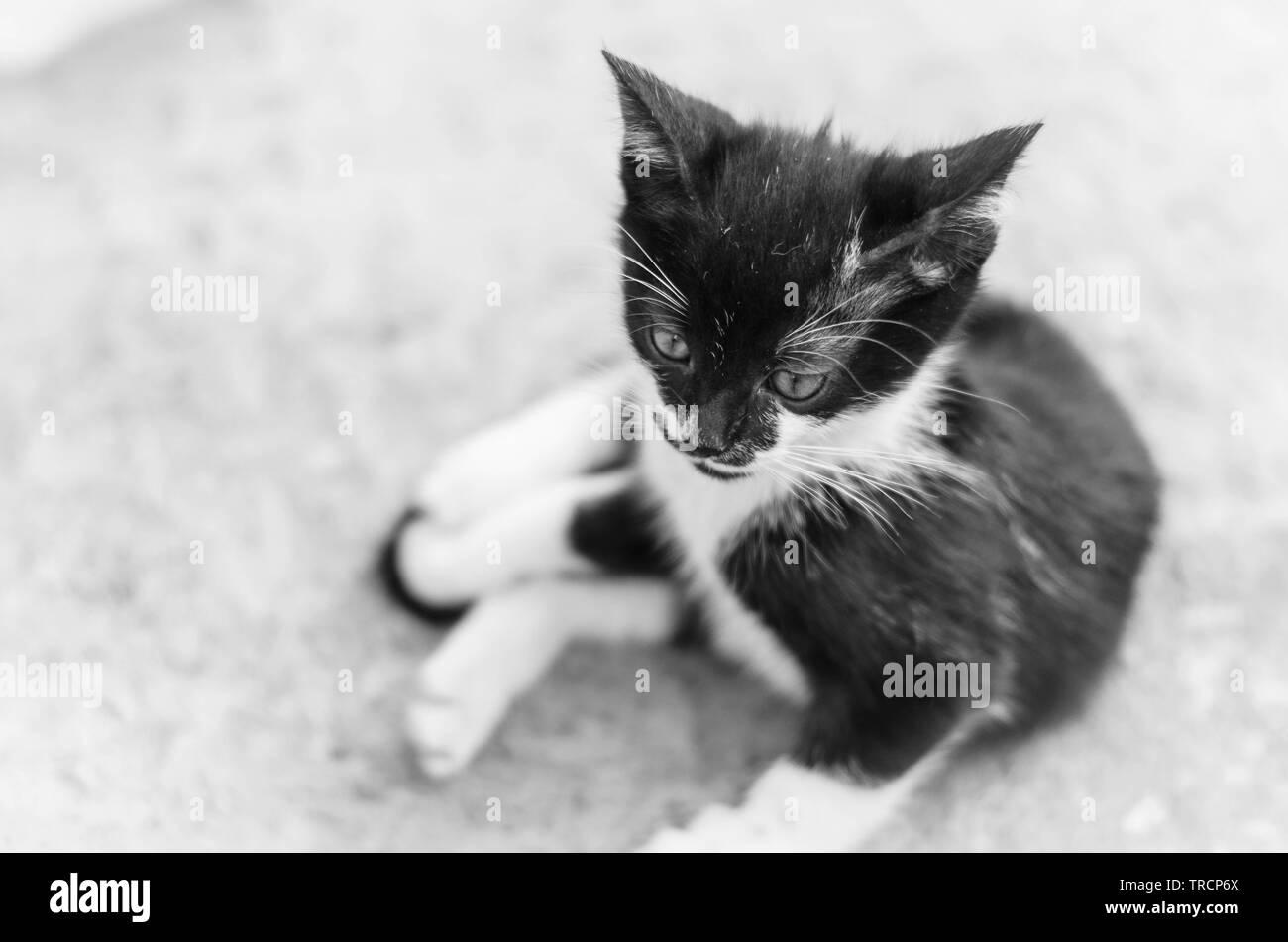 Liegende Jungkatze in Schwarz-Weiß - Stock Image