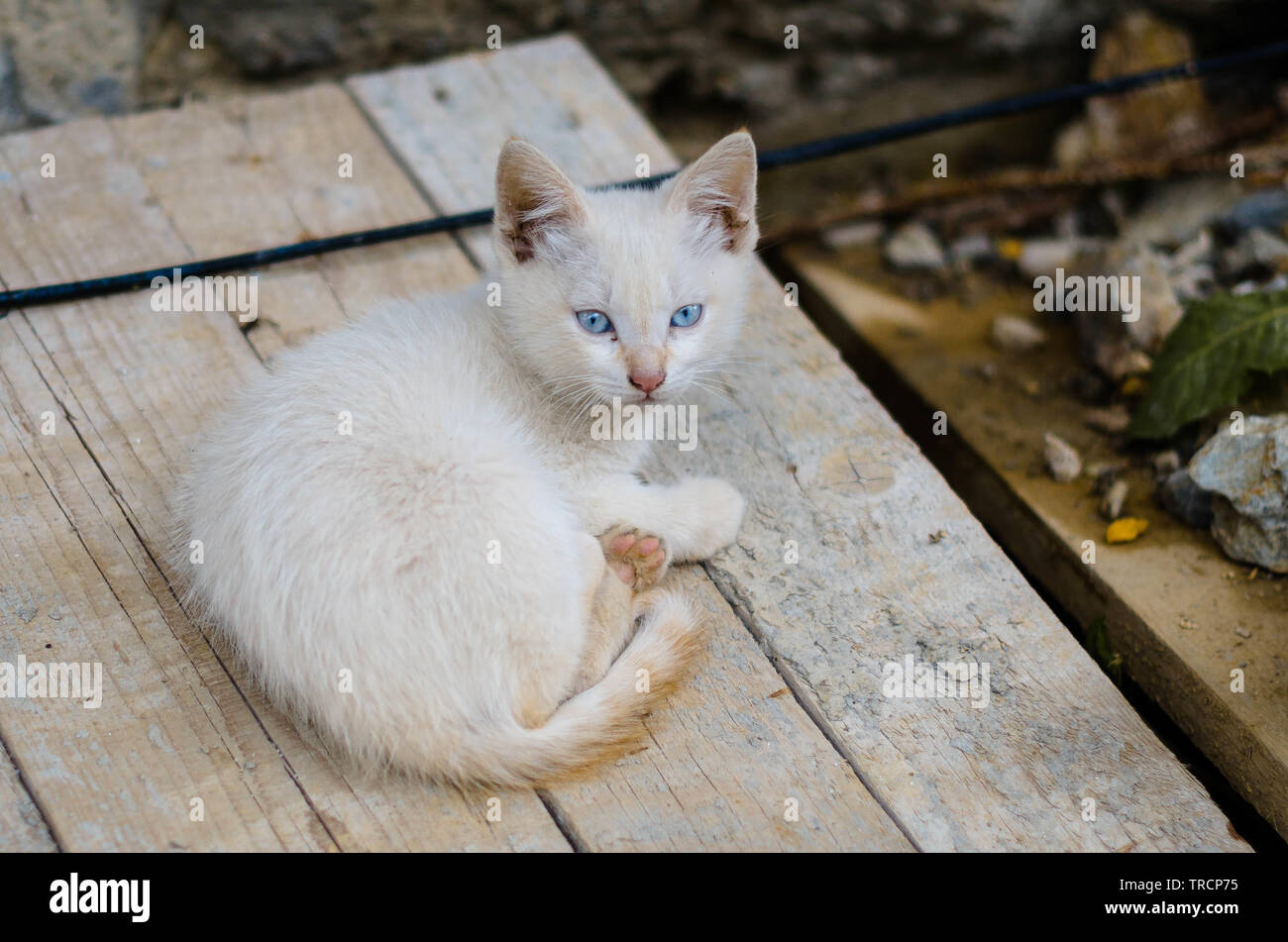 Aufmerksame junge Katze Stock Photo