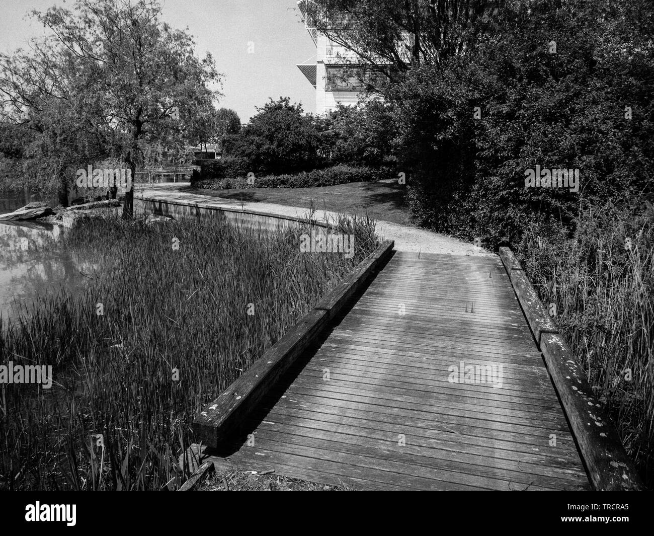 Walkway Threw Reedbed, With Office Buildings, Stockley Park, Harlington, Uxbridge - Stock Image