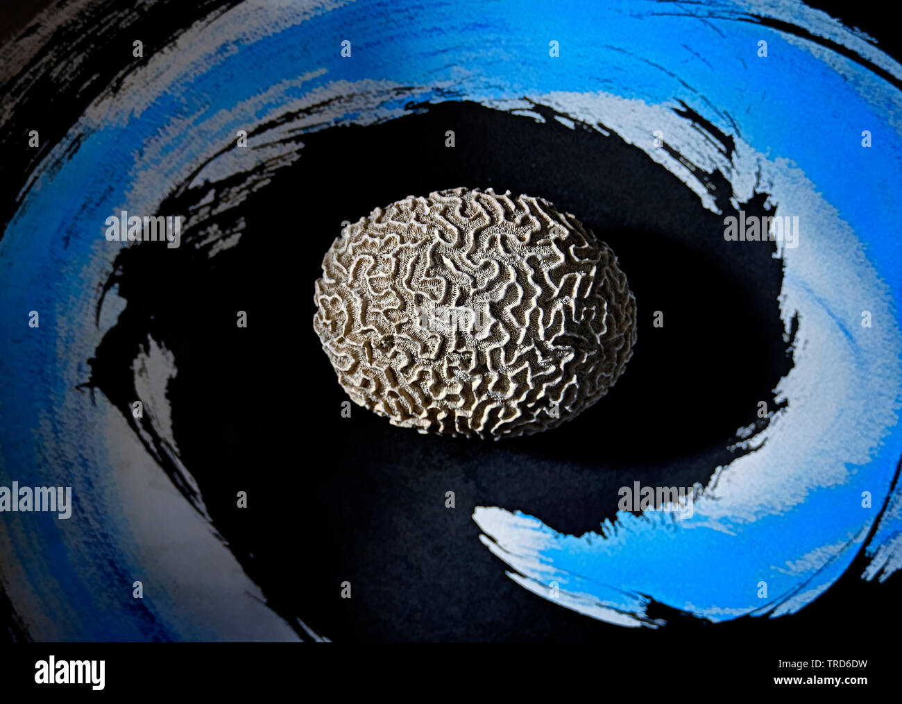 STILL LIFE PHOTO WITH BRAIN CORAL ON WATER COLOR PAINTING - Stock Image