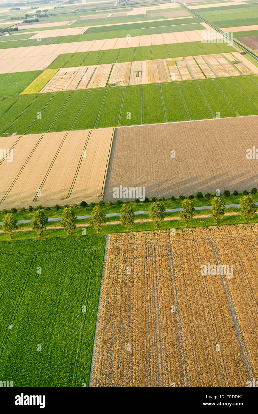 field landscape in North Holland, aerial photo, Netherlands, Northern Netherlands - Stock Image