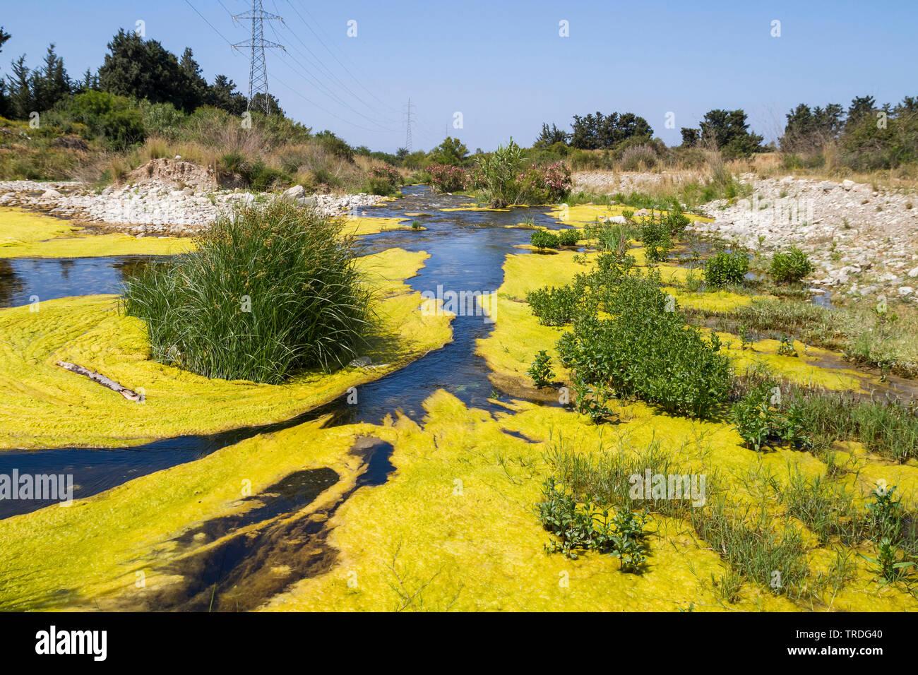 verschmutzter, mit Algen bewachsener Fluss, Zypern | eutrophic river on Cyprus, Cyprus | BLWS503041.jpg [ (c) blickwinkel/AGAMI/R. Martin Tel. +49 (0) Stock Photo