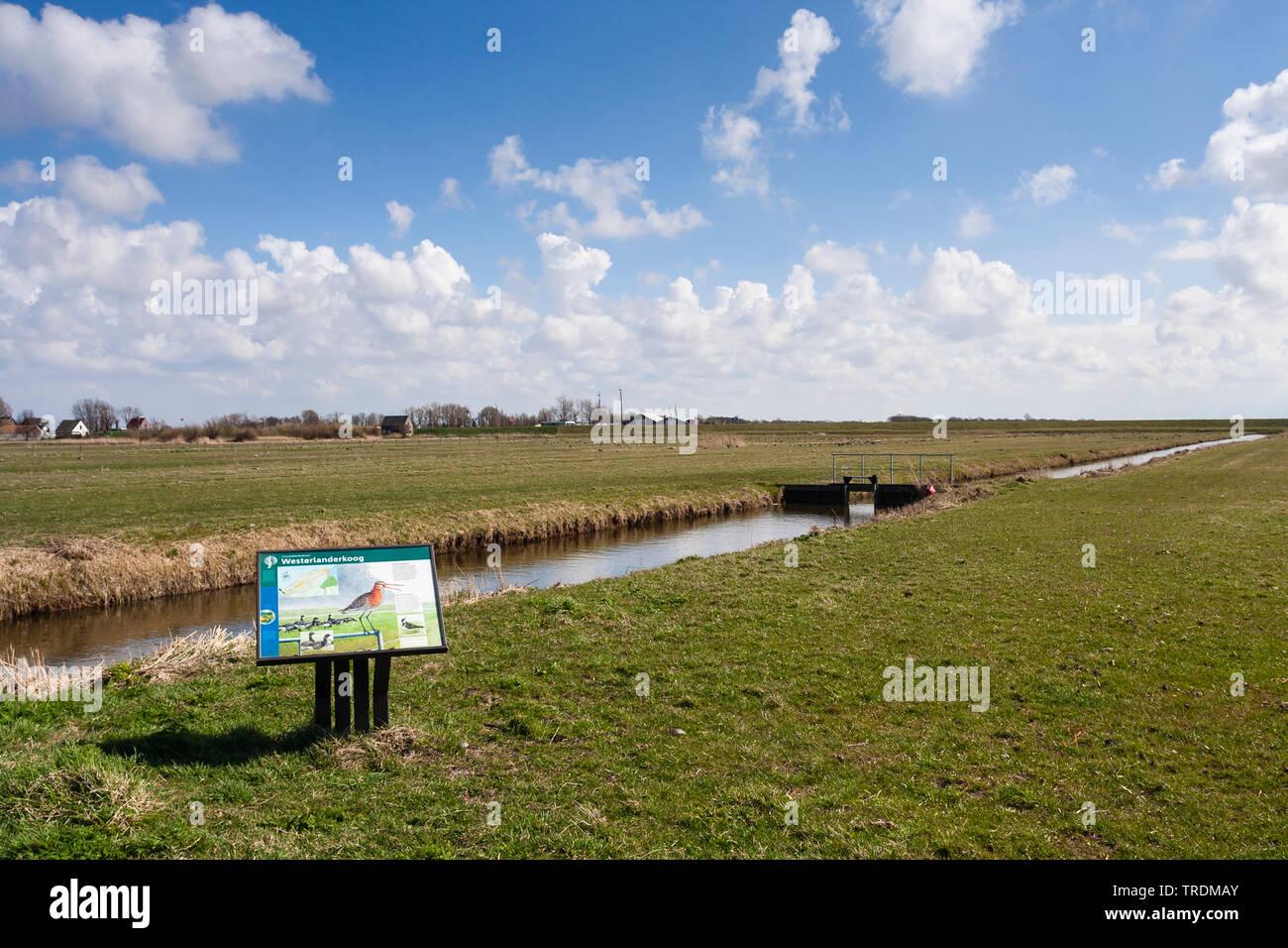 Westerlanderkoog mit Informationsschild ueber Voegel, Niederlande, Nordholland, Westerlanderkoog   Sign of Staatsbosbeheer at the Westerlanderkoog in - Stock Image