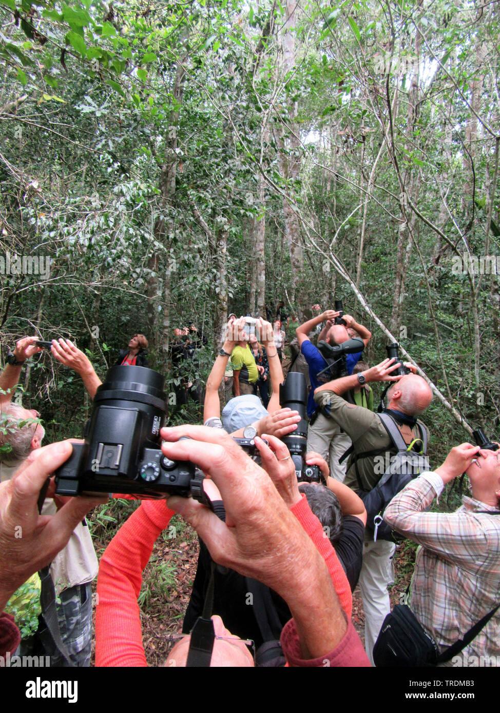 Sifakas (Propithecus spec.), Gruppe von Ornithologen auf Tour fotografieren Sifakas, Madagaskar | sifakas (Propithecus spec.), Birding tour groups pho - Stock Image