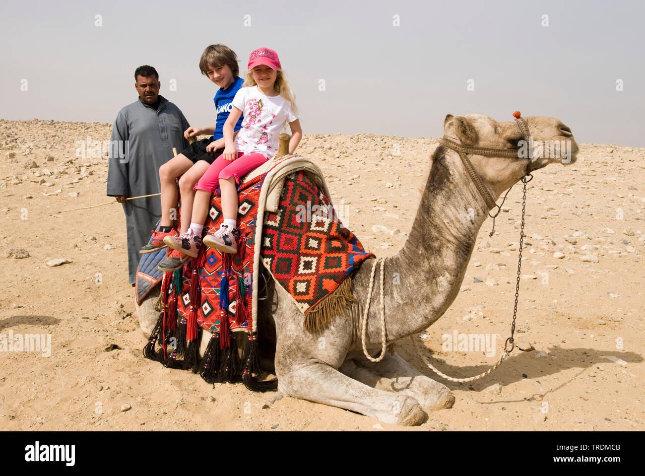 Trampeltier, Zweihoeckriges Kamel (Camelus bactrianus), Touristen am Kamel in Gizeh, Aegypten, Gizeh   Bactrian camel, two-humped camel (Camelus bactr - Stock Image