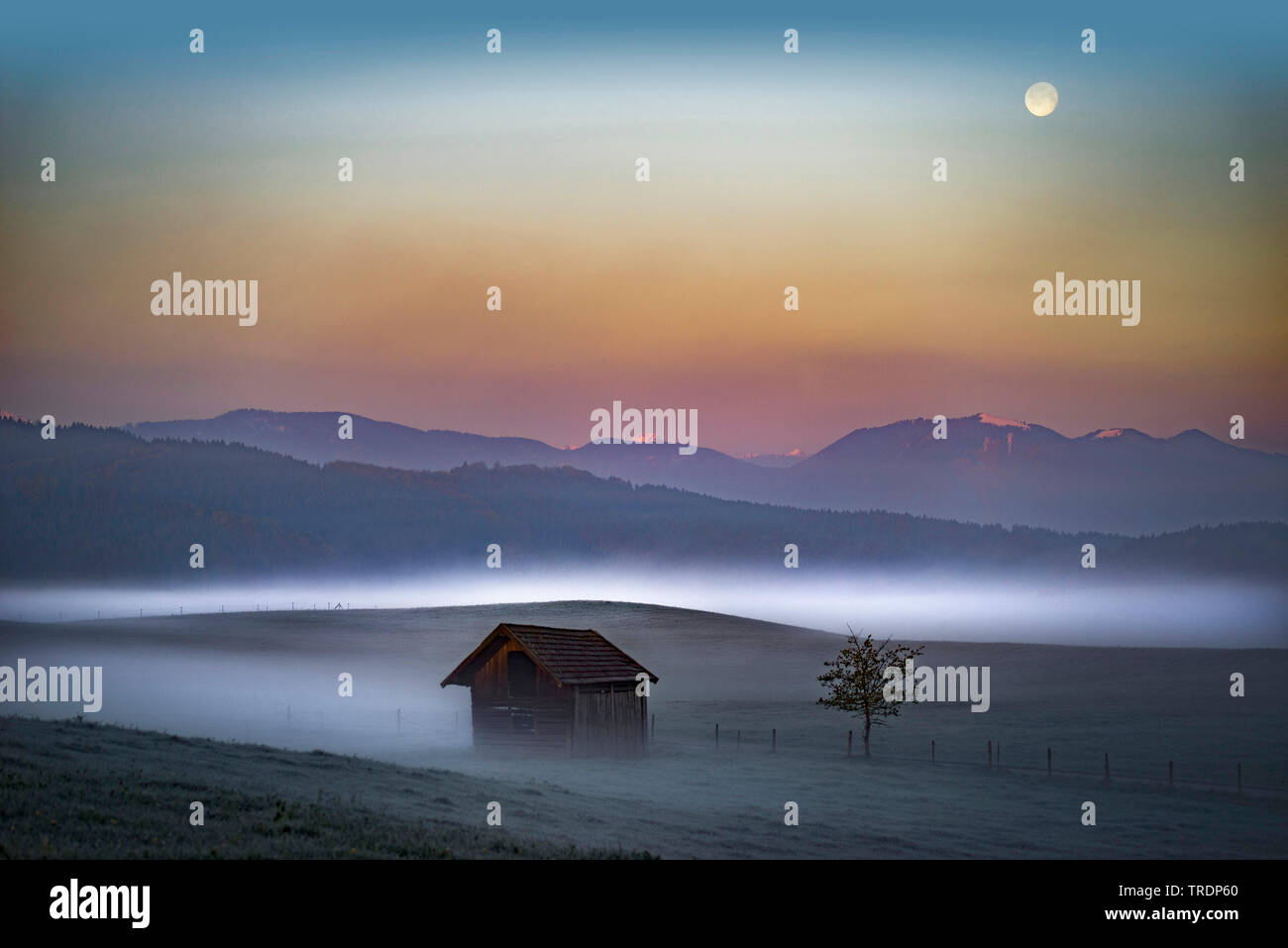 Morgennebel ueber Gebirgslandschaft in der Naehe von Murnau, Deutschland, Bayern, Oberbayern, Murnau | mountain landscape in morning mist near Murnau, - Stock Image