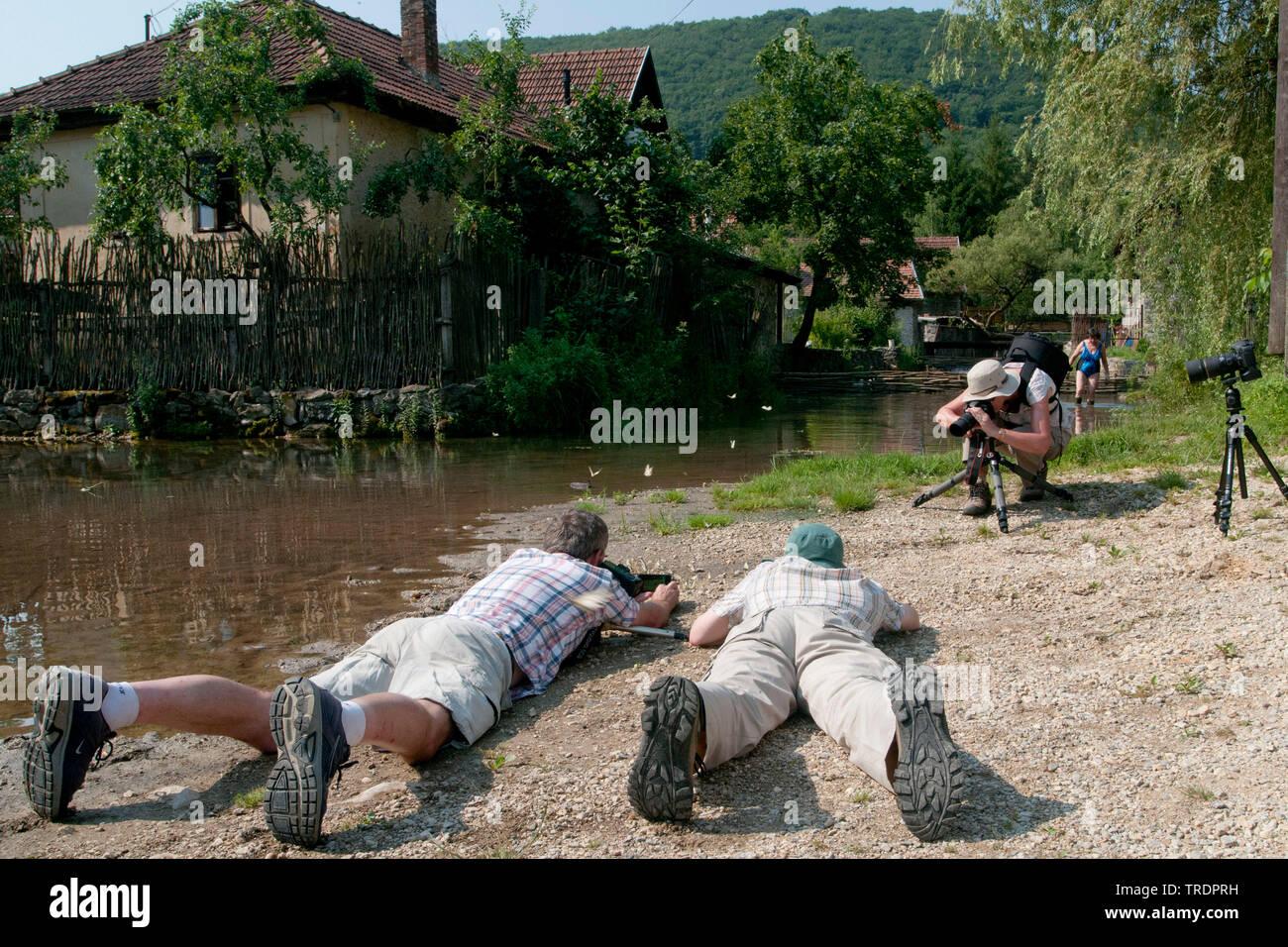 Fotografen liegen am Boden und fotografieren Schmetterlinge, Ungarn | lying on the ground taking photos of butterflies, Hungary | BLWS508895.jpg [ (c) - Stock Image
